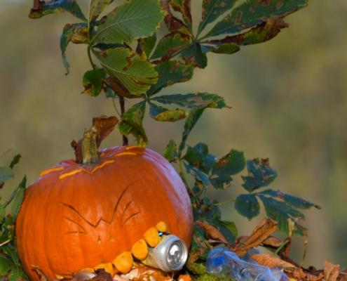 HALLOWEENowa akcja w Rezerwacie Świdwie dynia, śmieci, zbieranie śmieci, human waste zone, liście, jesień